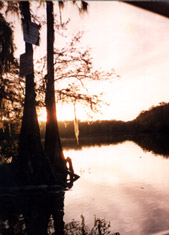 Sunrise on the Suwannee